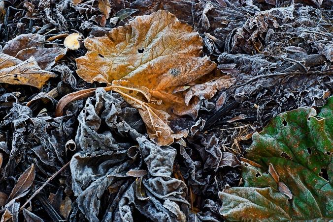 frost i grönsakslandet 3a