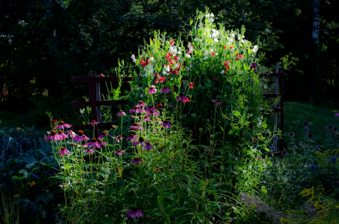 trädgård (2)