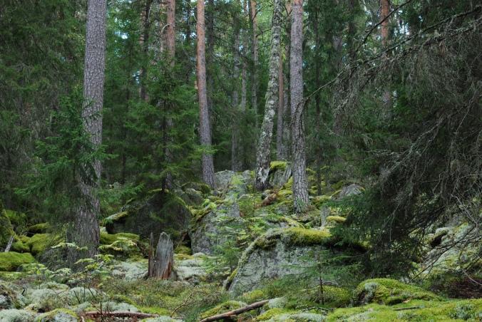 berg-skog